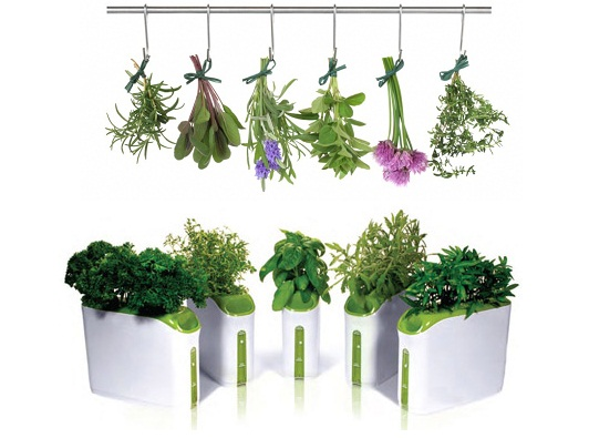 Plantes aromatique