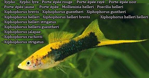 Xipho est un poisson d'eaux douces, ces descriptions, ces photos et ces vidéos sont ici à xopark.com 1.Xypho 2.Xipho 3.Xypho-lyre 4.Porte-épée rouge 5.Porte-épée rayé 6.Porte-épée noir 7.Porte-épée jaune 8.Porte-épée 9. Mollienisia helleri 10. Poecilia helleri 11. Xiphophorus brevis 12. Xiphophorus guentheri 13. Xiphophorus guntheri 14. Xiphophorus helleri 15. Xiphophorus helleri brevis 16. Xiphophorus helleri helleri 17. Xiphophorus helleri strigatus 18. Xiphophorus hellerii guentheri 19. Xiphophorus jalapae 20. Xiphophorus rachovii 21. Xiphophorus strigatus