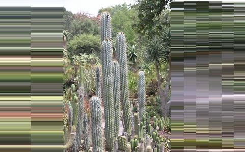 xopark2Browningia-hertlingiana