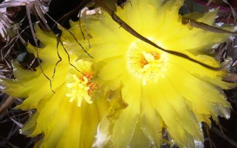xopark6Agave-cactus—Prism-cactus—Leuchtenbergia-principis