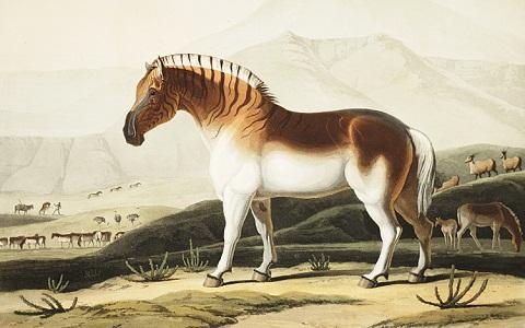 Equus-quagga-quagga-xopark2