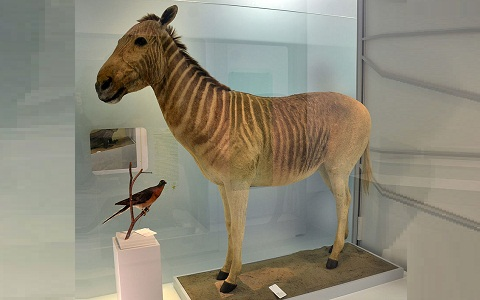 Equus-quagga-quagga-xopark4