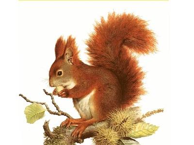 Rongeurs: Écureuils