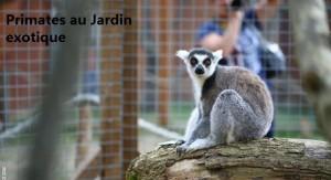 Primates au Jardin exotique