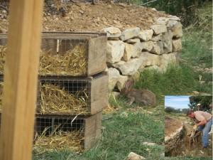 lâcher de lapins