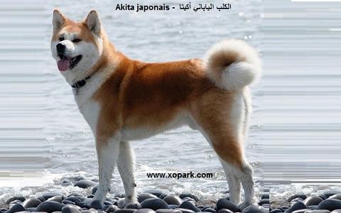 xopark2Akita-japonais