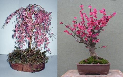 xopark2Abricotier-du-japon—Prunus-mume
