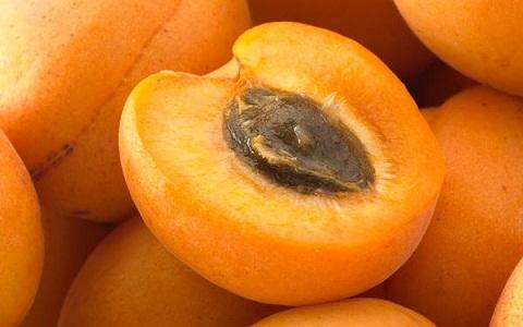 xopark6Abricotier—Prunus-armeniaca