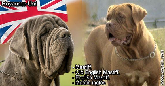 Mastiff,Old English Mastiff,English Mastiff,Mastín inglés