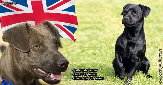 Patterdale Terrier,Black Fell Terrier, ChienNoir Fell Terrier