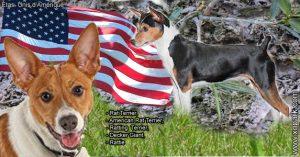 Rat Terrier,American Rat Terrier,Ratting Terrier,Decker Giant,Rattie