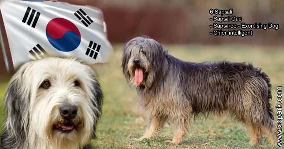 Sapsali - Sapsal Gae - Sapsaree - Exorcising Dog - Chien intelligent