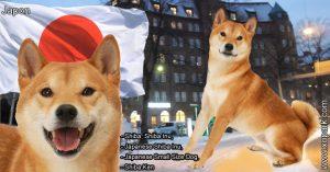 Shiba, Shiba Inu, Japanese Shiba Inu, Japanese Small Size Dog, Shiba Ken