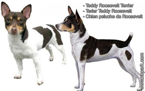 Teddy Roosevelt Terrier – Terier Teddy Roosevelt – Chien peluche de Roosevelt – xopark1