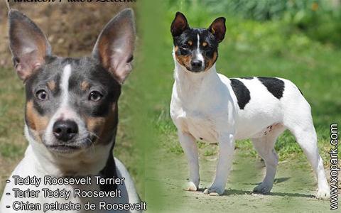 Teddy Roosevelt Terrier – Terier Teddy Roosevelt – Chien peluche de Roosevelt – xopark2
