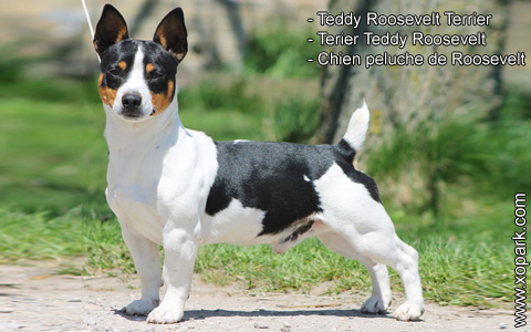 Teddy Roosevelt Terrier – Terier Teddy Roosevelt – Chien peluche de Roosevelt – xopark3