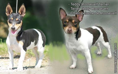 Teddy Roosevelt Terrier – Terier Teddy Roosevelt – Chien peluche de Roosevelt – xopark4