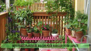 Meilleures plantes de balcon pour habiller votre espace