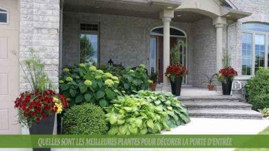 Quelles sont les meilleures plantes pour décorer la porte d'entrée