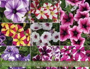 PETUNIAS : Quelles sont les meilleures plantes pour décorer la porte d'entrée