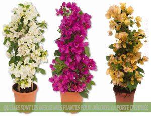 BOUGAINVILLEA : : Quelles sont les meilleures plantes pour décorer la porte d'entrée