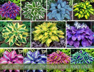 HOSTA : Quelles sont les meilleures plantes pour décorer la porte d'entrée