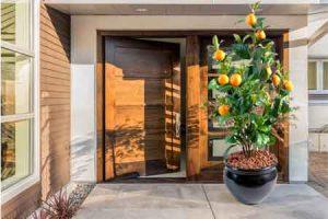 Agrumes - Citrus : Quelles sont les meilleures plantes pour décorer la porte d'entrée