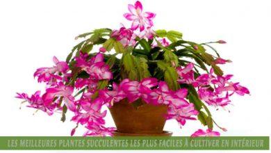 Les meilleures plantes succulentes les plus faciles à cultiver en intérieur