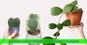 Meilleures plantes d'intérieur source d'amour et de bonheur