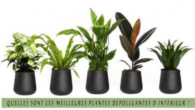 Quelles sont les meilleures plantes dépolluantes d'intérieur ?