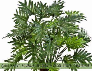 Quelles sont les meilleures plantes dépolluantes d'intérieur ? Philodendron