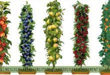 Quels meilleurs arbres fruitiers qui produisent rapidement ses fruits?