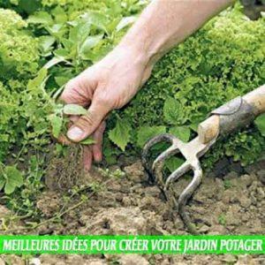 Empêchez les mauvaises herbes de pousser un des Meilleures idées pour créer votre jardin potager