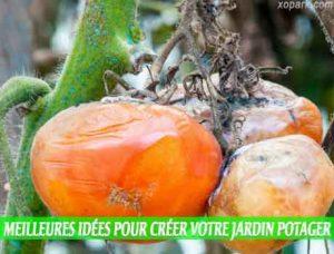 Combattre les maladies fongiques est une Meilleures idées pour créer votre jardin potager